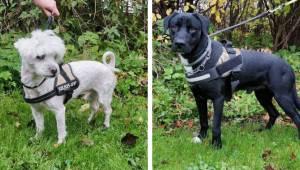 Alene og væk hjemmefra: To hundes ejere efterlyses
