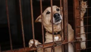 Låser sine hunde inde i små bure uden vand: Slipper nu med advarsel